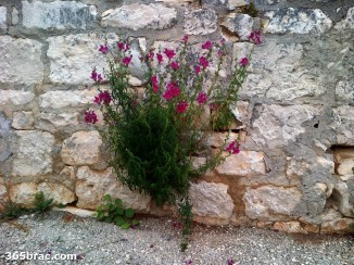 flower_stone