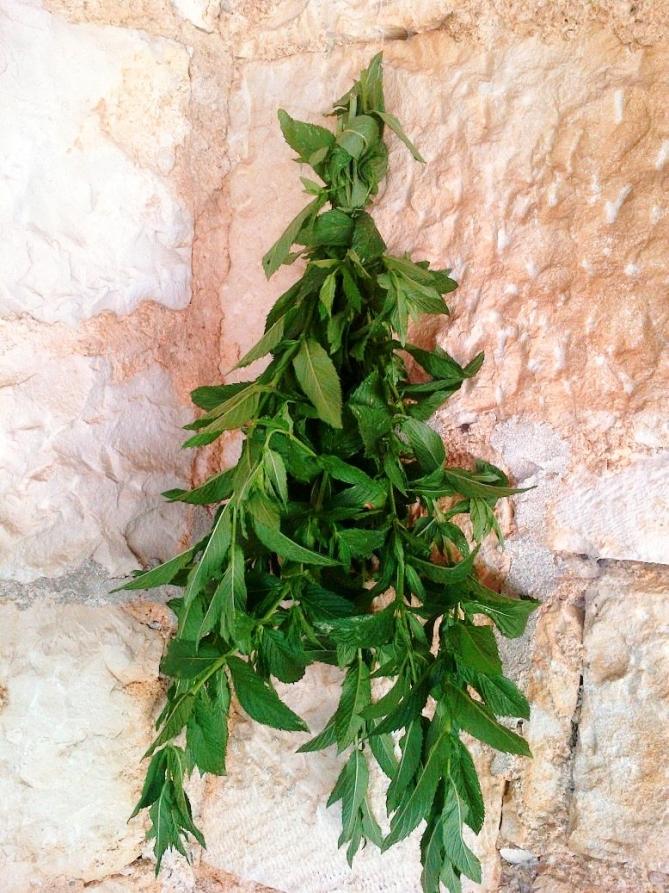 mint-leaves-dry