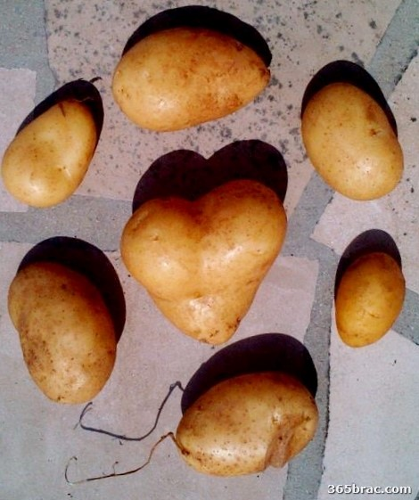 potato_heart