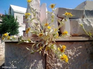 yellow_flower_stone